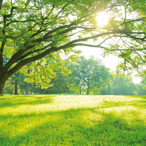 Wald mit grüner Wiese